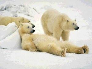 polar dufnering